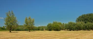 有树的晴朗的干燥农场土地在Kalkense Meersen自然保护,富兰德,比利时的清楚的蓝天下 免版税库存照片