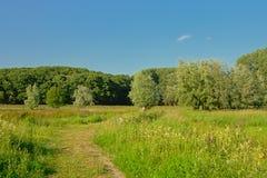 有树的晴朗的沼泽在Kalkense Meersen自然reerve,富兰德,比利时的清楚的蓝天下 免版税库存图片