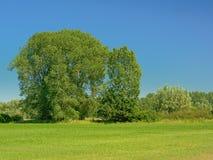 有树的晴朗的绿色草甸在Kalkense Meersen自然保护,富兰德,比利时的清楚的蓝天下 库存照片