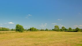 有树的晴朗的草甸在Kalkense Meersen自然reerve,富兰德,比利时的清楚的蓝天下 免版税库存照片