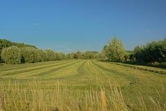有树的晴朗的被割的草甸在Kalkense Meersen自然reerve,富兰德,比利时的清楚的蓝天下 免版税图库摄影