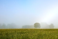 有树的有薄雾的早晨草甸 库存照片