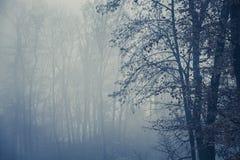 有树的有雾的森林 免版税库存图片