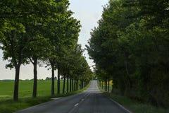 有树的柏油路在边缘 免版税图库摄影