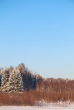 有树的森林在白色雪和蓝天 库存图片