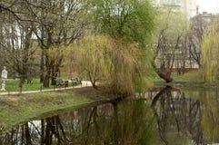 有树的池塘 免版税库存照片