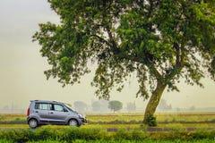 有树的汽车 免版税库存照片