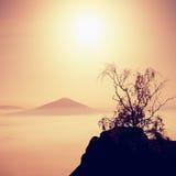 有树的海岛 在一座美丽的山的满月夜 砂岩岩石峰顶从海洋有雾增加了 免版税库存照片