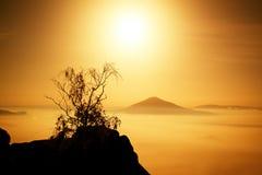 有树的海岛 在一座美丽的山的满月夜 砂岩岩石峰顶从海洋有雾增加了 库存照片