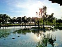 有树的湖在中心 库存照片