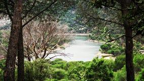 有树的湖在西班牙 免版税库存图片