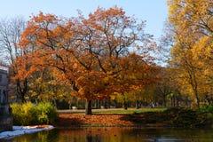 有树的秋天公园在水 库存照片