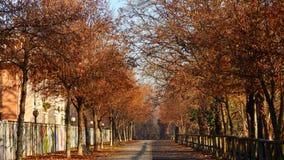 有树的秋天街道 库存图片