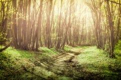 有树的童话森林和在有薄雾的道路的自然阳光穿过自然 免版税图库摄影