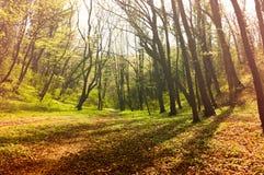 有树的童话森林和在有薄雾的道路的自然阳光穿过自然 免版税库存图片