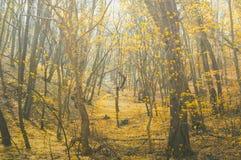 有树的童话森林和在有薄雾的道路的自然阳光穿过自然 免版税库存照片