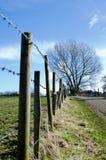 有树的篱芭作为主要 免版税图库摄影