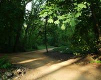 有树的绿色阴影公园在早晨 库存照片
