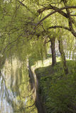 有树的美丽的垂悬河和的草  库存照片