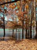 有树的美丽的湖 免版税图库摄影