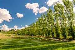 有树的美丽的道路 免版税库存图片