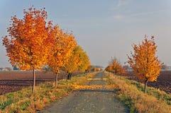 有树的胡同与橙色叶子 库存图片