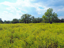 有树的花草甸 免版税库存图片