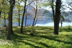 有树的草甸和在一个蓝色山湖的公园长椅 库存图片