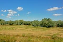 有树的草甸在Kalkense Meersen自然保护,富兰德,比利时的清楚的蓝天下 免版税库存图片