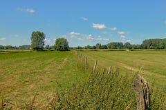 有树的草甸在Kalkense Meersen自然保护,富兰德,比利时的清楚的蓝天下 库存照片
