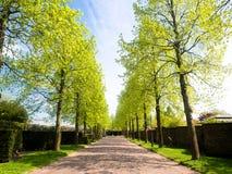 有树的街道春天 免版税库存照片