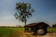 有树的被放弃的房子 库存照片