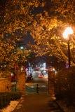 有树的走道在晚上 免版税库存照片