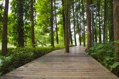有树的路在公园 库存图片