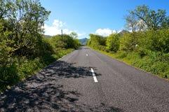 有树的路在爱尔兰 免版税库存图片