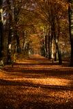有树的路在秋天 免版税库存照片