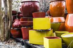 有树的陶瓷盆栽植物 免版税库存照片