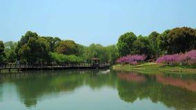 有树的,灌木,草,庭院道路,池塘美丽的公园在一好日子 股票录像
