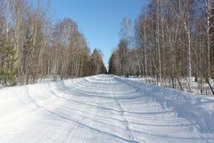 有树的阴影的雪路在桦树木头的 库存图片