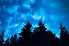 有树的黑森林在蓝色夜空 库存图片