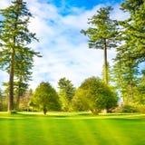 有树的绿色草坪在公园 免版税库存照片