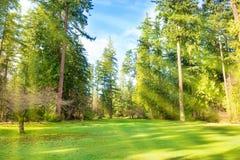 有树的绿色草坪在公园 免版税库存图片