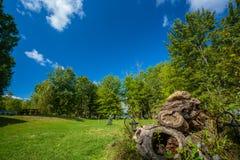 有树的绿色草坪在公园 免版税图库摄影