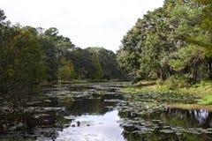 有树的Florida湖在它附近 库存图片