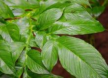 有样式和纹理的-抽象自然本底绿色叶子 库存照片