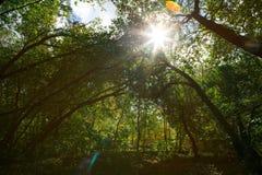 有根和漂流木头的绿色森林 免版税库存图片