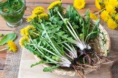 有根的全蒲公英植物在篮子 免版税库存照片