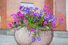 有桃红色和紫色花的都市花圃 图库摄影