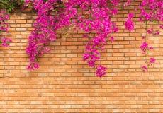 有桃红色花的橙色砖墙构造背景 图库摄影