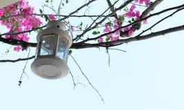 有桃红色花的灯笼反对蓝天 免版税图库摄影